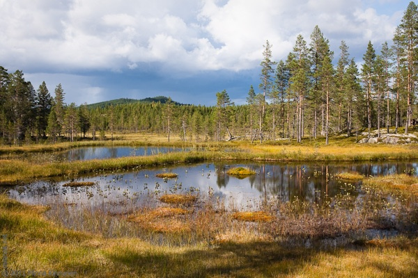 Sundsjön nature reserve with one of those rain clouds that circled around