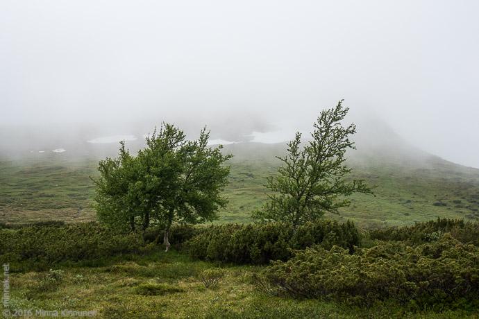 Low clouds at Stor-Mittåkläppen
